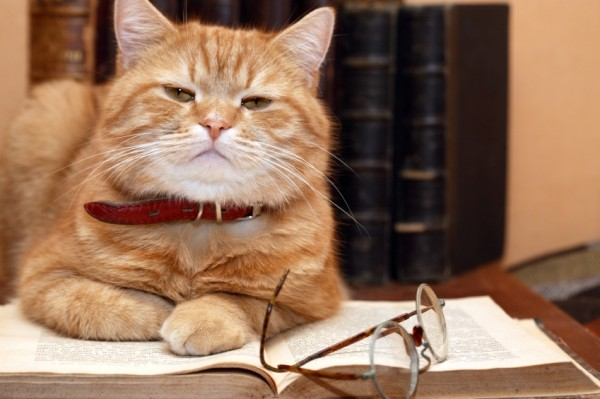 Closeup of ginger cat lying on old book near spectacles on books background