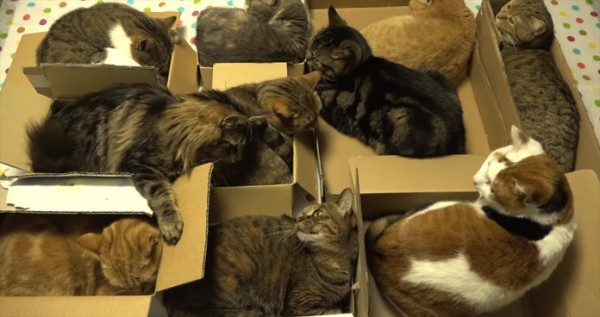 cats-slumber-party-696x368