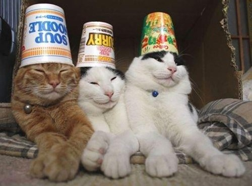 party-cats_thumb