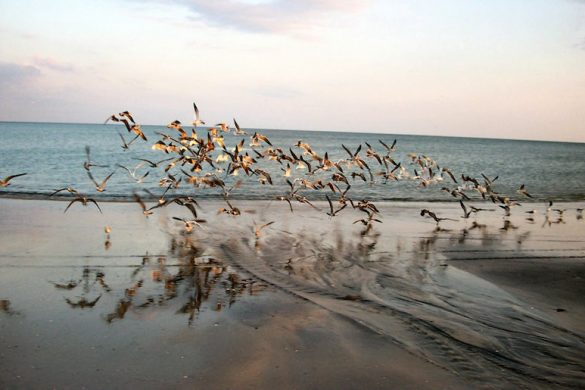 Sea_birds_departure_-_panoramio
