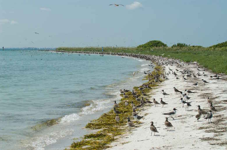 numerous-shorebirds-nesting-on-coastline
