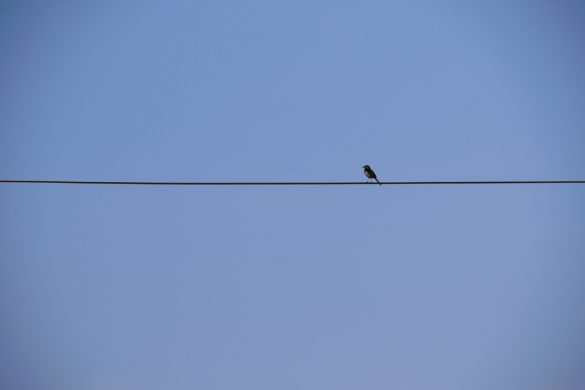 Bird-on-tightrope