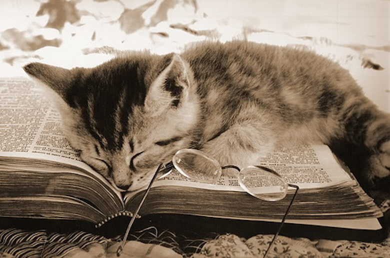 cat_asleep_on_book