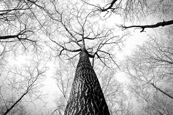 branches-238379_960_720